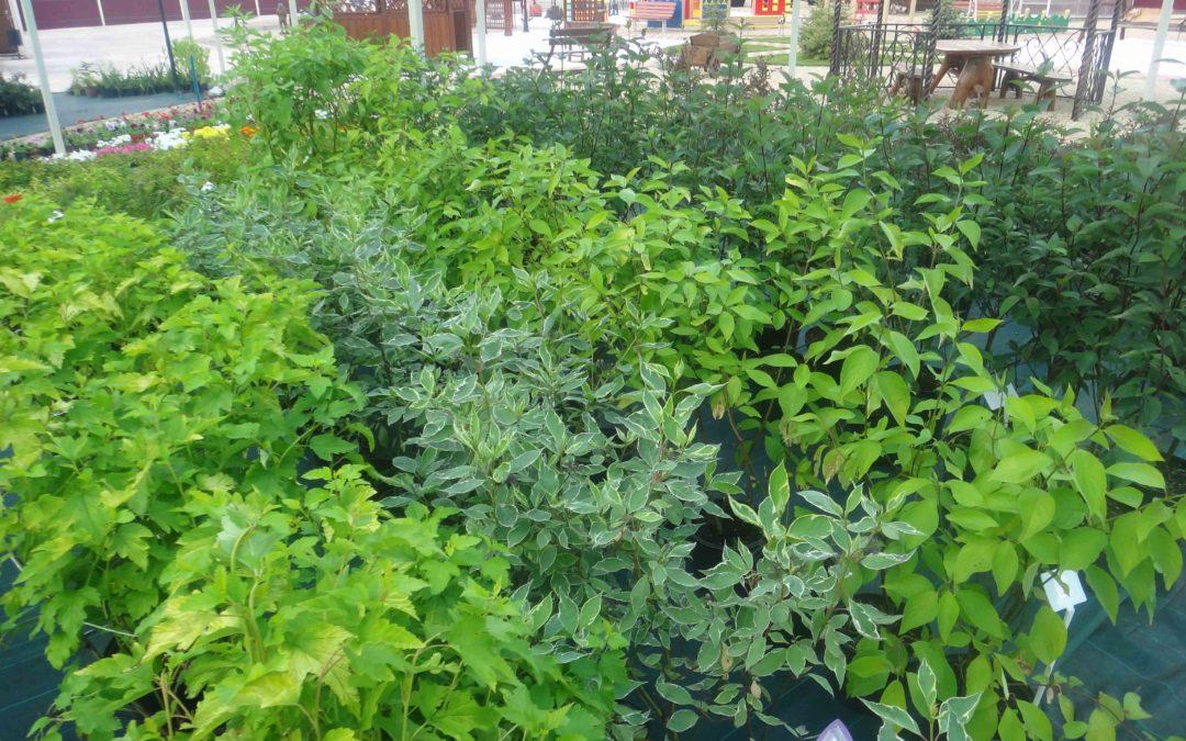 Памятка по посадке и уходу за растениями