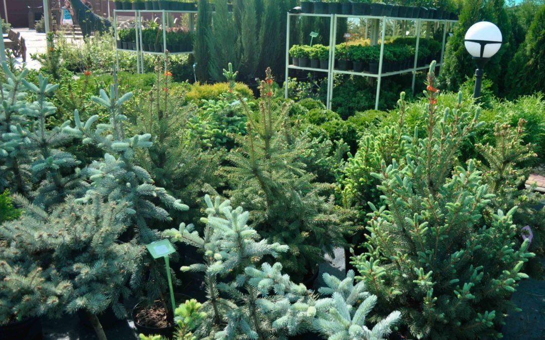 Как подготовить декоративные растения к зиме